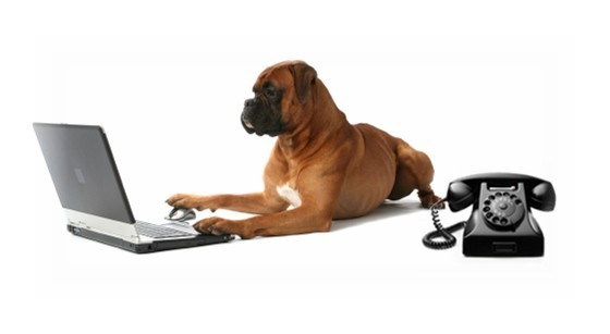 Dog using computer mouse