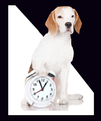 Peace of Mind Boarding Kennels Open Hours Dog with Clock graphic