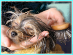 Peace of Mind Boarding Kennels for dogs graphic Happy dog being brushed