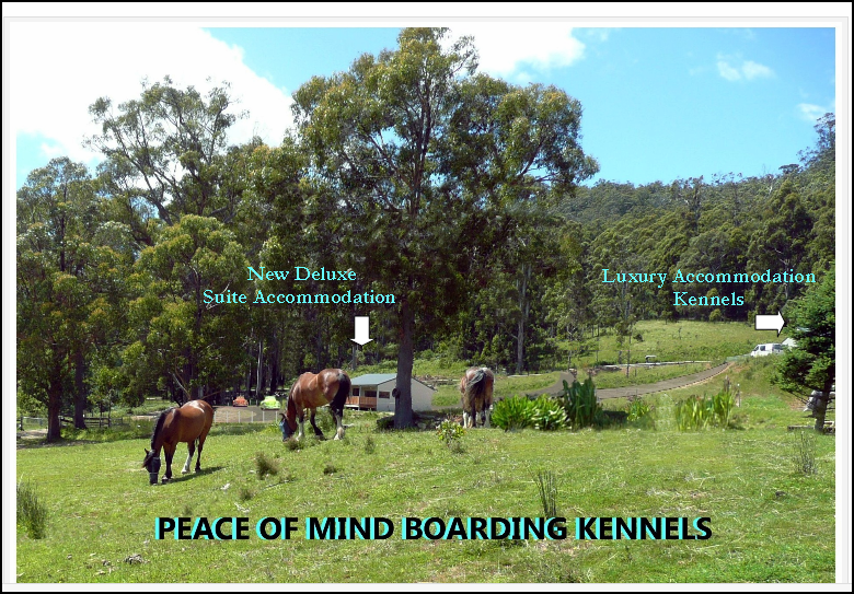 Peace of Mind Boarding Kennels Graphic New Deluxe Suites for dogs